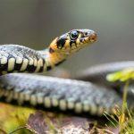 Nằm mơ thấy rắn: Đánh con gì? Điềm gì cần lưu tâm {Tâm linh}